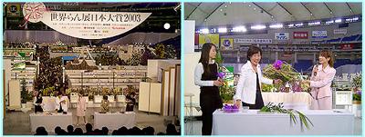「ギフトショー春2003(2/20)」、「世界らん展日本大賞(2/23)」